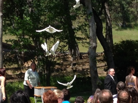 The parents surprised Sarah and Eric with the doves.  It was special.  You could really tell that they were surprised!